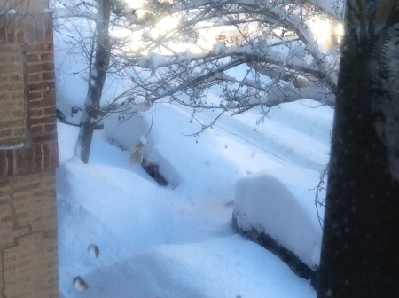 Post Blizzard (Feb 2015)